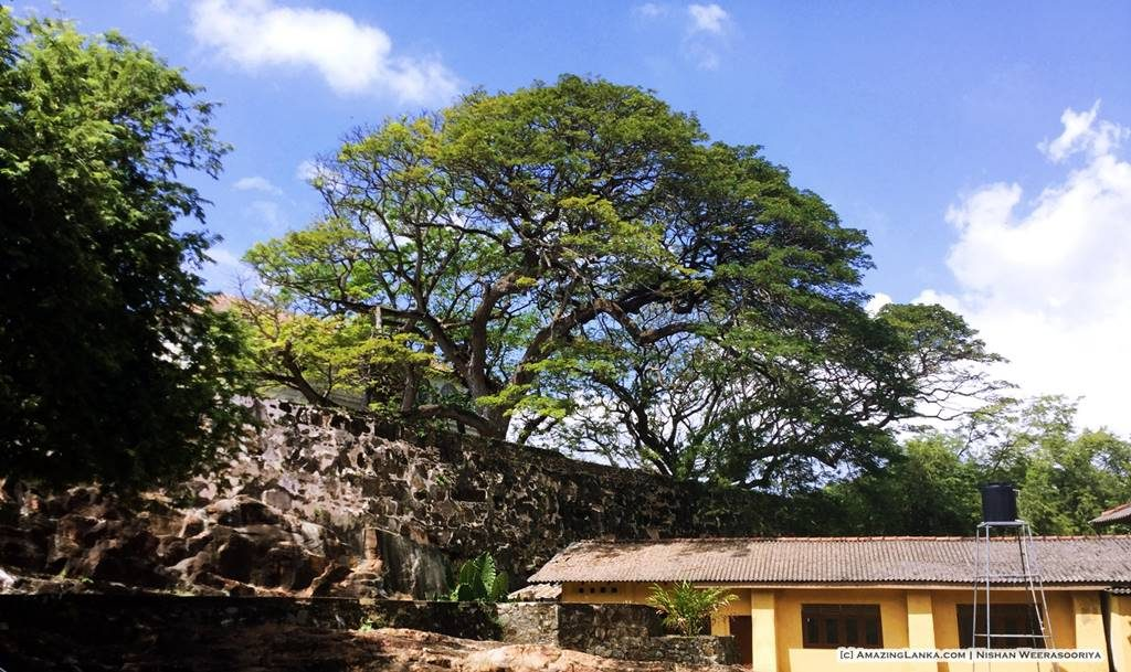 The wall of the Galle Fort on the North Eastern side seen from outside.