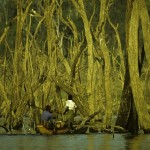 Fishermen at Gal Oya through the dead trees -Gal Oya National Park