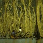 Fishermen at Gal Oya through the dead trees -Gal Oya National Park
