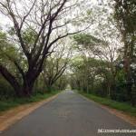 On the way to Maduru Oya National Park - road between Aralaganwila and Maduru Oya