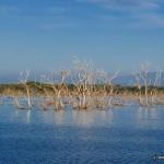 Veheragala Reservoir @ Lunuamvehera National Park