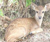 Hiyare Reservoir Rainforest