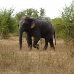 Somawathi National Park