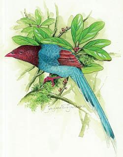 Sri Lanka's endemic birds