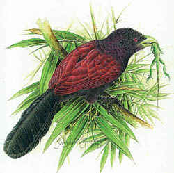 Sri Lanka's endemic birds
