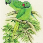 Parrots of Sri Lanka