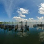 Mangroves and Prawn Farms of Madu Ganga