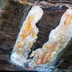 Punchi Sigiriya Gonagolla — Paintings similar to Sigiri Paintings at Punchi Sigiriya — in Gonagolla, Sri Lanka.