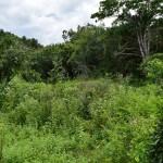 Jungle where the balance Erabadugaswewa Ruins is lying