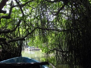 Mangrove tunnel in Madu Ganga Sri Lanka
