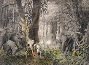 Stalking elephants, Bibile, 6th May by Count Emanuel Andrasy (1821-1891)