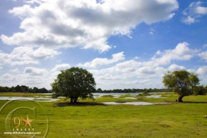 Drought had dried out water from Balalu wewa. There are few waterholes scattered around apart from the main water body. Trees that were once drowned in the lake have now reappeared and the lake bed is full of vegetation.
