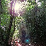 Entering the forest while the rays of the sun tried to creep through Govinda Hela - Bingoda