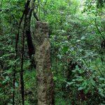 Ruins at Kethsirigama Mihindu Aranya Senasanaya