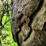 Ancient drip ledge caves of Harasgala Gallen Viharaya