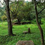 Ruins scattered around Illukpitiya Rajamaha Viharaya