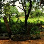 Ruins of Thottama Kukuluwa Rajamaha Viharaya Archaeological Site