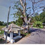 Paramaulla Historic Geta Kumbuk Tree