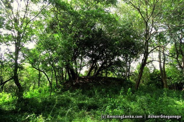 Ruins of the ancient stupa at Maha Andarawewa Archaeological Reserve / Andarawewa Walagamba Rajamaha Viharaya