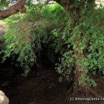 Periya Mandapam Limestone Caves in Jaffna