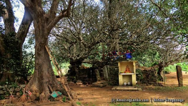 The ancient Bodhi tree of Yatimadura Jethawanarama Rajamaha Viharaya