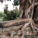ළමා උද්යානයක මුවාවෙන් වනසන සේනවල්ලිකුලම පුරාවිද්යා භූමිය - Thambalagamuwa Senawallikulam Archaeological Site