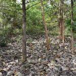ත්රිකුණාමලය ශ්රී සුනන්දාරාම රජමහ විහාරය පුරාවිද්යා නටබුන් - Archaeological Ruins in Sri Sunandarama Rajamaha Viharaya in Trincomaleeත්රිකුණාමලය ශ්රී සුනන්දාරාම රජමහ විහාරය පුරාවිද්යා නටබුන් - Archaeological Ruins in Sri Sunandarama Rajamaha Viharaya in Trincomalee