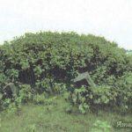 ඔඩ්ඩුසුඩාන් මුතියංකට්ටුව වැව් තාවුල්ලේ ගොඩනැගිලි නටබුන් - Muthiyankadduwa Archaeological Ruins in Mulativu