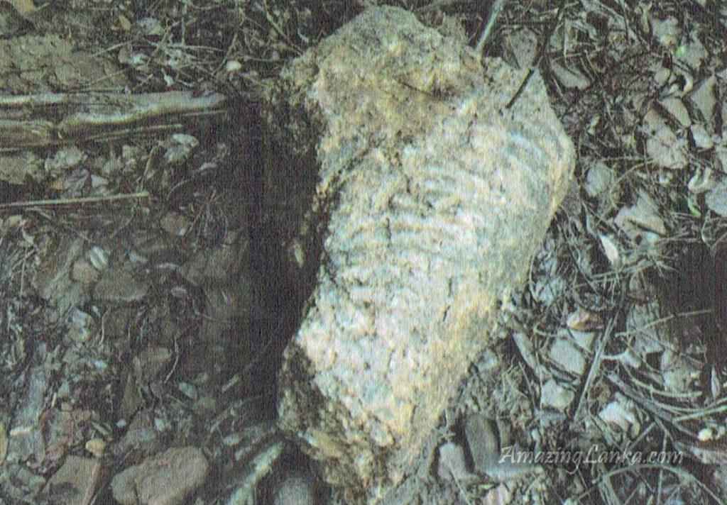 ඔඩ්ඩුසුඩාන් මුතියංකට්ටුව වැව් තාවුල්ලේ කඩා දමන ලද හුණුගල්  පාශානයෙන් නෙලනලද අලංකාර හිටි පිළිමයේ කොටස්   - Muthiyankadduwa  Archaeological Ruins in Mulativu